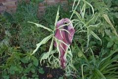 bloemen-juni2004-029
